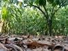 [en]Hershey\'s Project / Mexico Cocoa Foundation[/en][es]Proyecto Hershey´s/ Fundación Cacao México[/es]